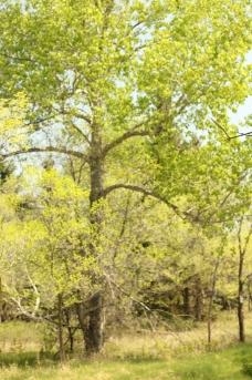 tree IMG_9971.jpg
