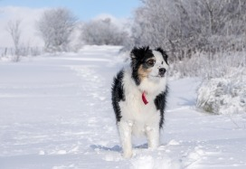 Protect your dog in the severe cold winter weather warnings.