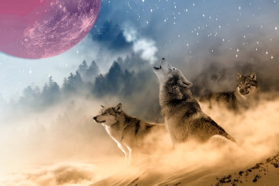 2019 lunar eclipse: 'super blood wolf moon'
