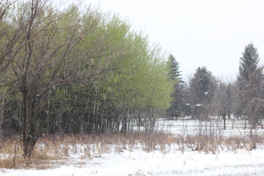 The magic of George Genereux Park, City of Saskatoon at RM of Corman Park 344 boundary